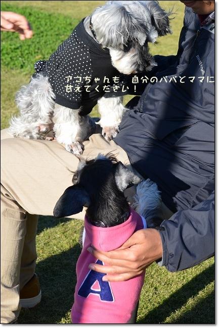 coconon_20121118_10398.jpg