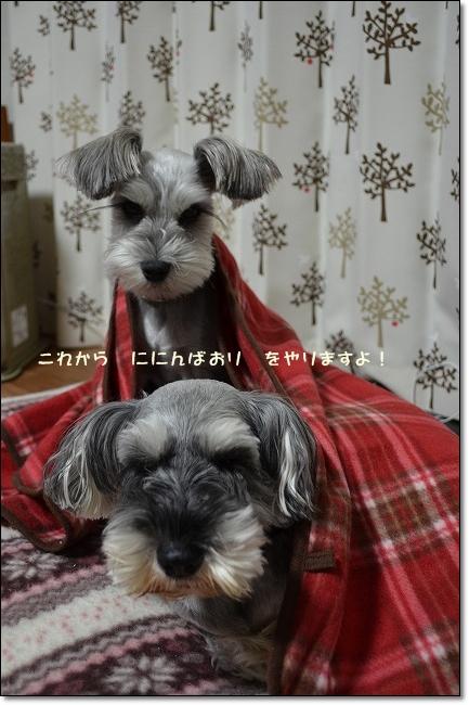 coconon_20121209_12101_20121212081331.jpg