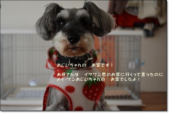 coconon_20121227_12740_20121228075634.jpg