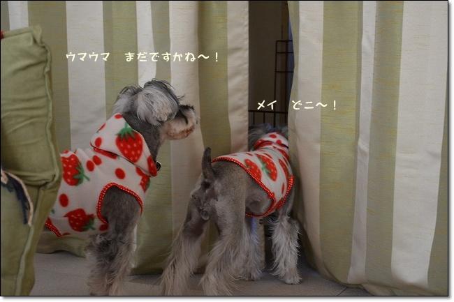 coconon_20121227_12742.jpg
