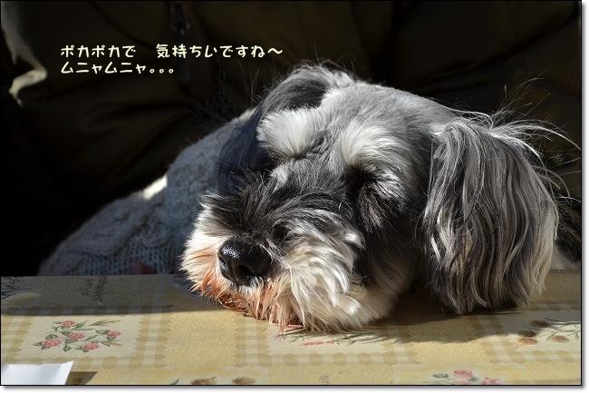 coconon_20130112_13077.jpg