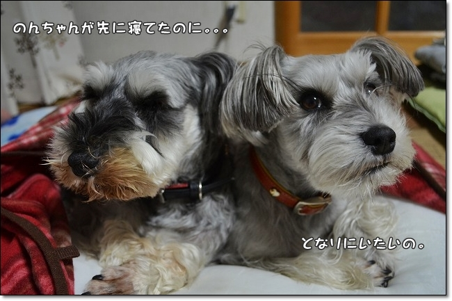 coconon_20130218_14381.jpg