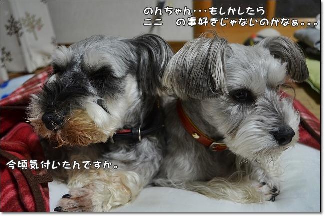 coconon_20130218_14382.jpg