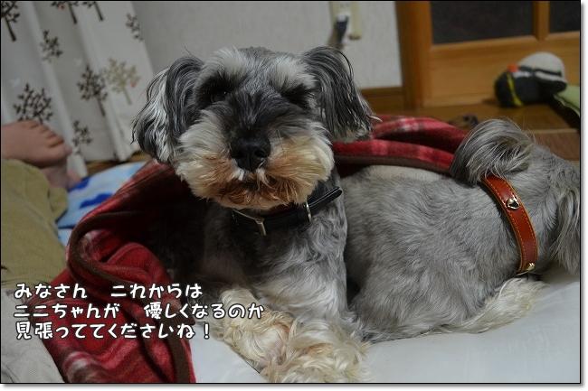 coconon_20130218_14384.jpg