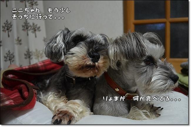 coconon_20130218_14395.jpg