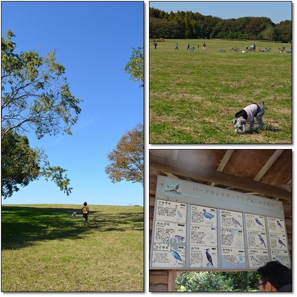 hiroba_20121106084120.jpg
