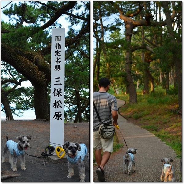 mihonomatubara_20120805110344.jpg