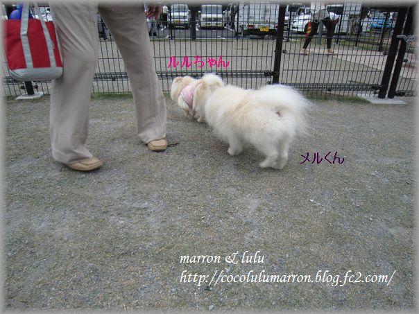 513dogrun3