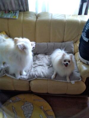 fc2blog_201207071502010e3.jpg