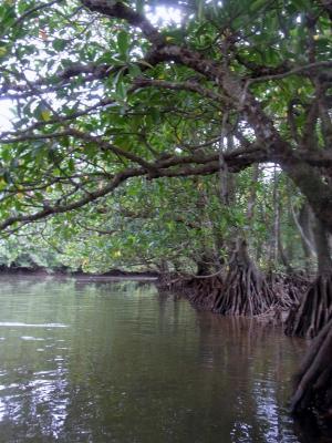 mangrobe