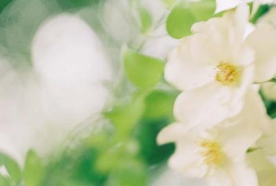 flowerwithlight