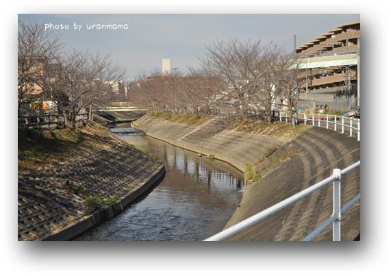 9DSC_0501.jpg