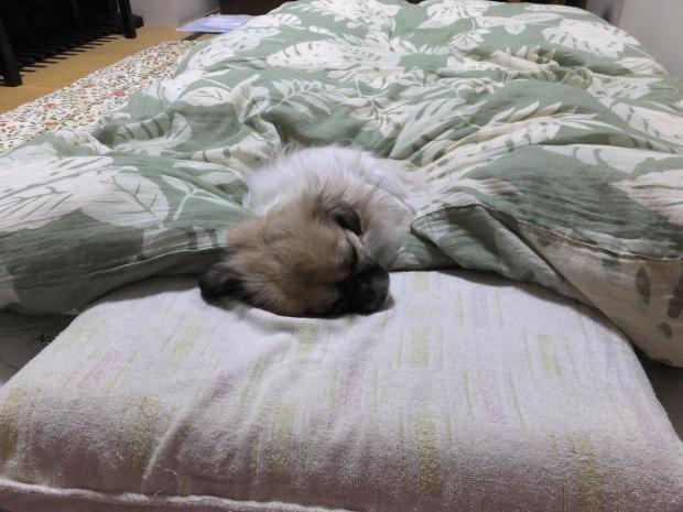 ⑪そして、寝る…
