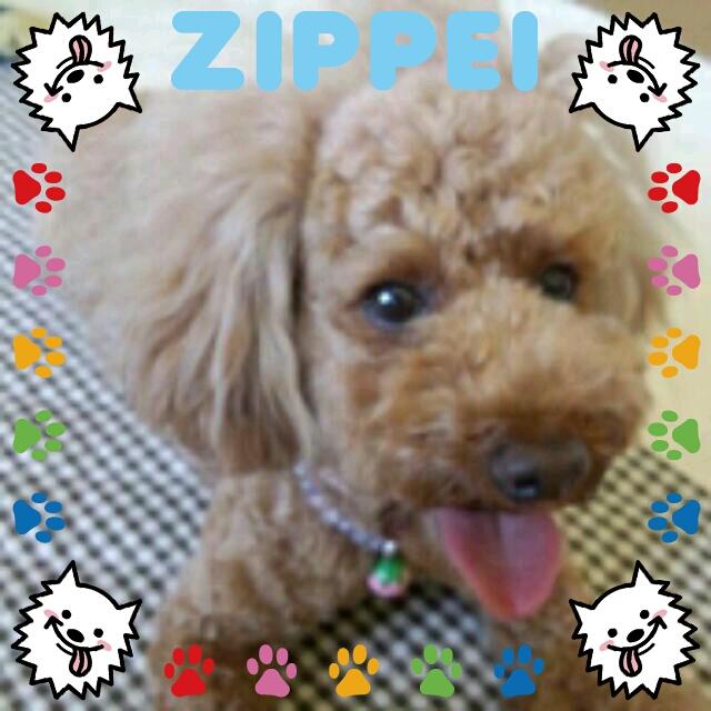zip_20120802085233585.jpg