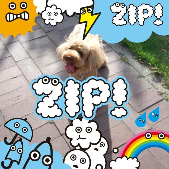 zip_20120802102403442.jpg
