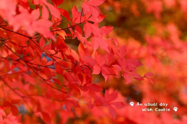 11_20121129212125.jpg