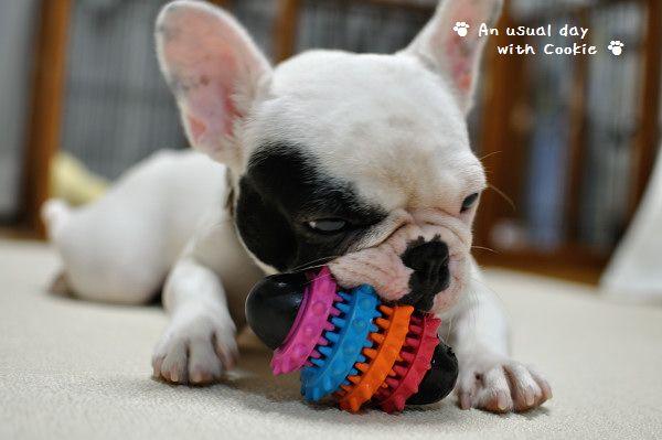 おもちゃかじかじ_2673