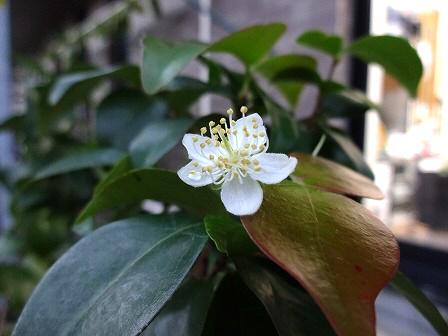 かわいい花ですね