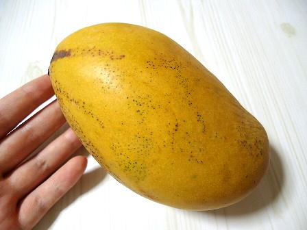 マリカマンゴー