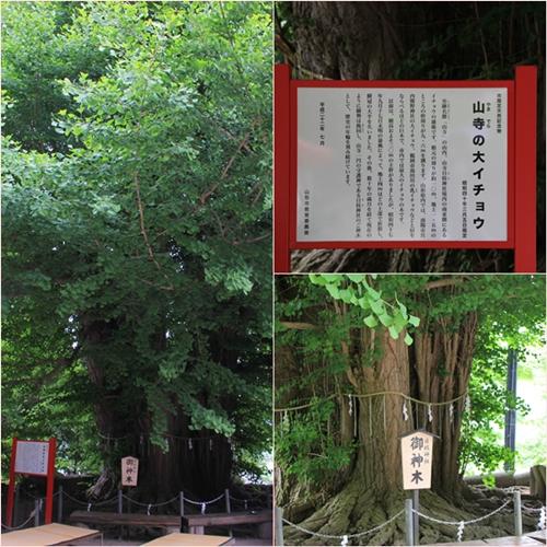 20120616yamadera2.jpg