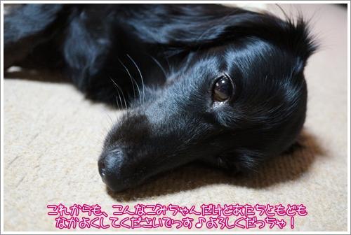 DSC03444_20121018215142.jpg