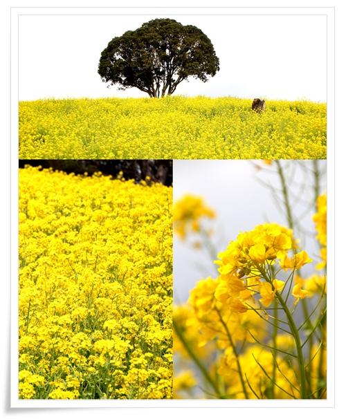 motherfarm02.jpg