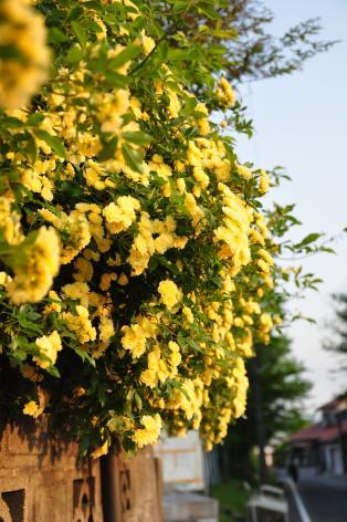 DSC_0039_convert_20120523120502.jpg