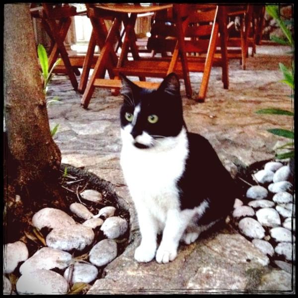 ドブロブニクの猫