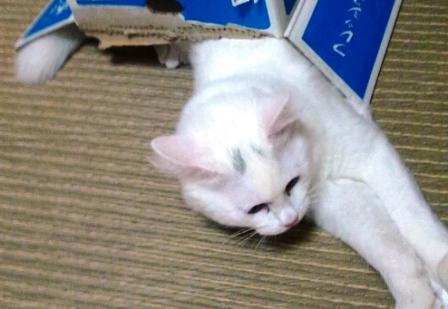 0222iyokan.jpg