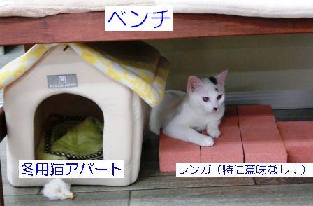 動画1 008