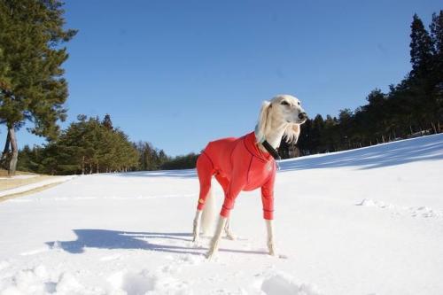 晴天続きの雪山8