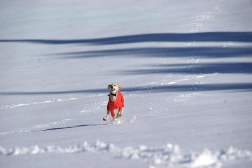 晴天続きの雪山9