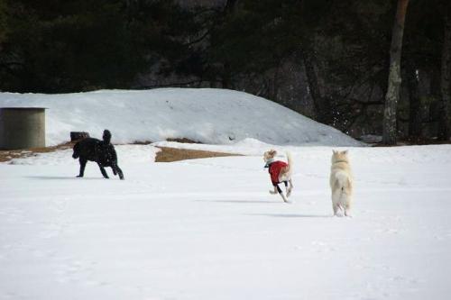 雪原わんこ1