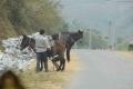 DSC_7868今日は馬もいた
