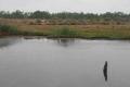 34バクダン川の杭が見つかった場所