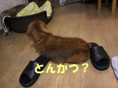 いぶちょい19