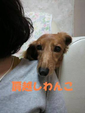 ちるちょい05