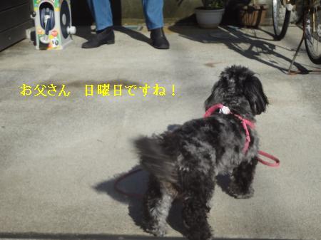 DSC07713_convert_20121118132947.jpg