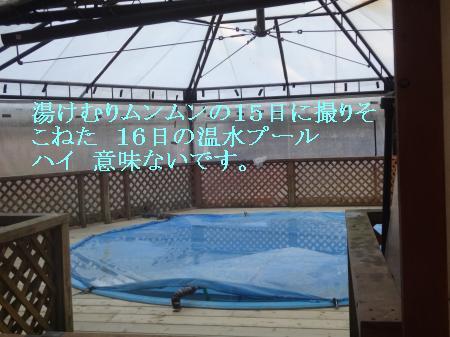 DSC07991_convert_20121216194852.jpg