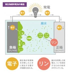 gihu-univ_bacteria_batery_image.jpg