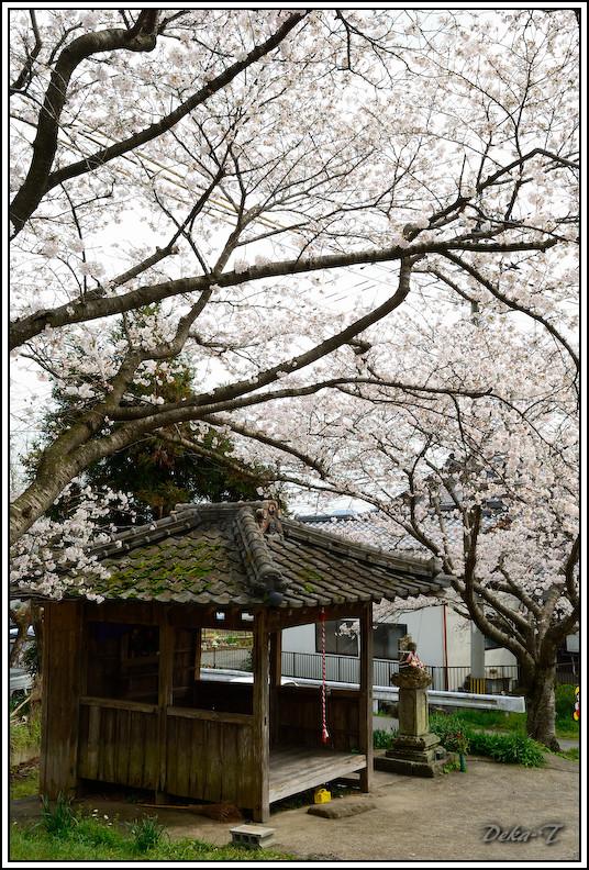 2013年円応寺・鹿島桜の里・祐徳稲荷 (17)