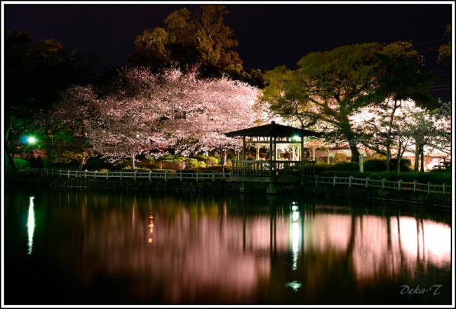 2013年3月26日大村公園夜桜 (24)