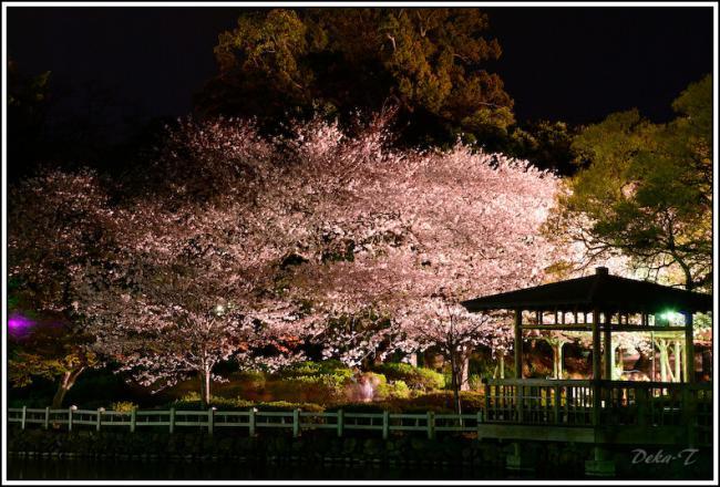 2013年3月26日大村公園夜桜 (25)