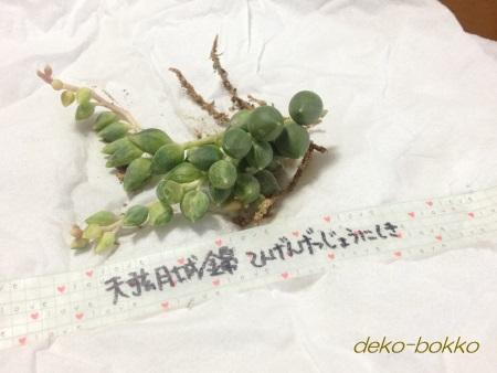 天弦月城錦 新入り 201411