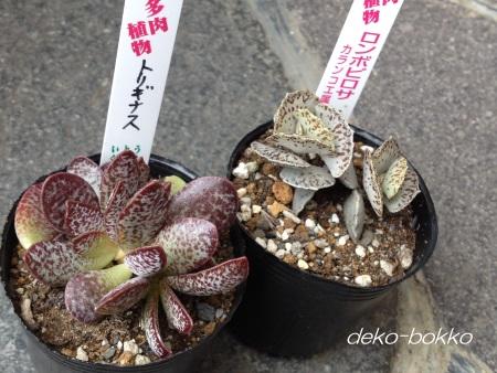 キモカワ入荷 201412