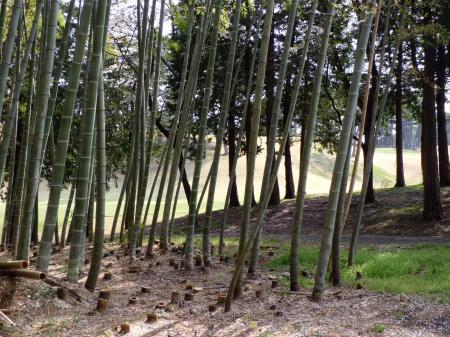ゴルフ場竹林