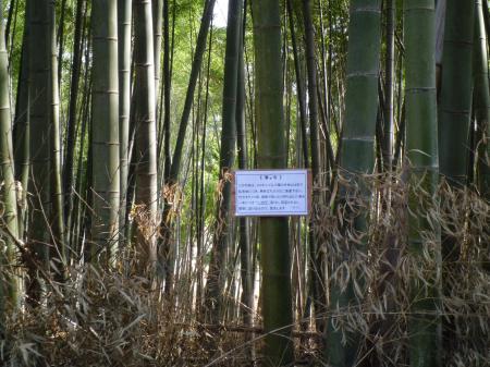 竹林看板1