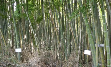 竹林看板2