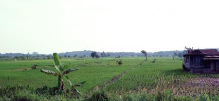 マレーシアの田んぼ