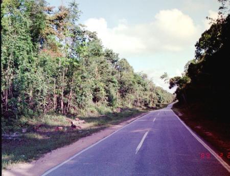 ジャングル内の国道